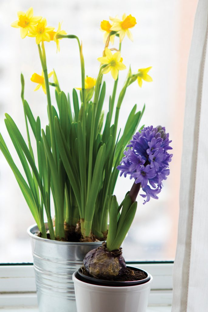 hyacinth and daffodils flower on window sill in early spring